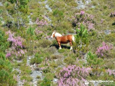 Sierra del Caurel (Serra do Courel) grupos senderismo senderismo viajes senderismo madrid rutas